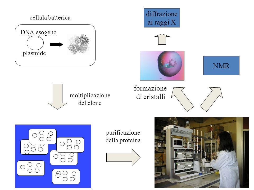 diffrazione ai raggi X NMR formazione di cristalli cellula batterica