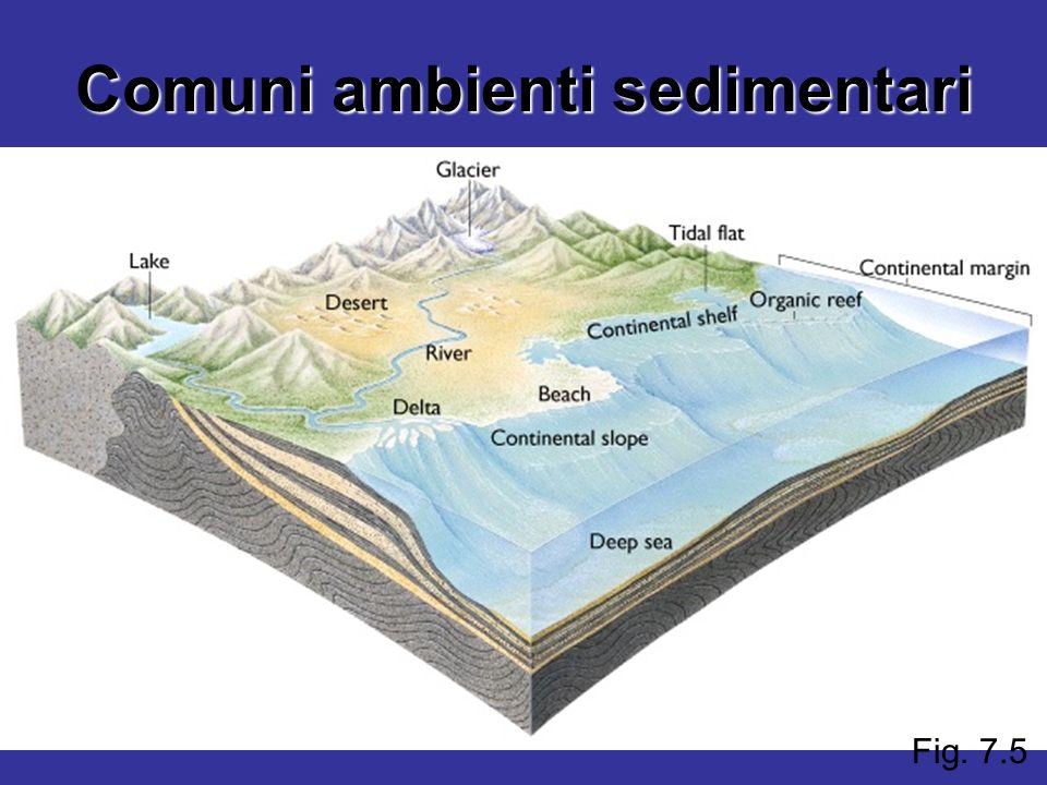 Comuni ambienti sedimentari