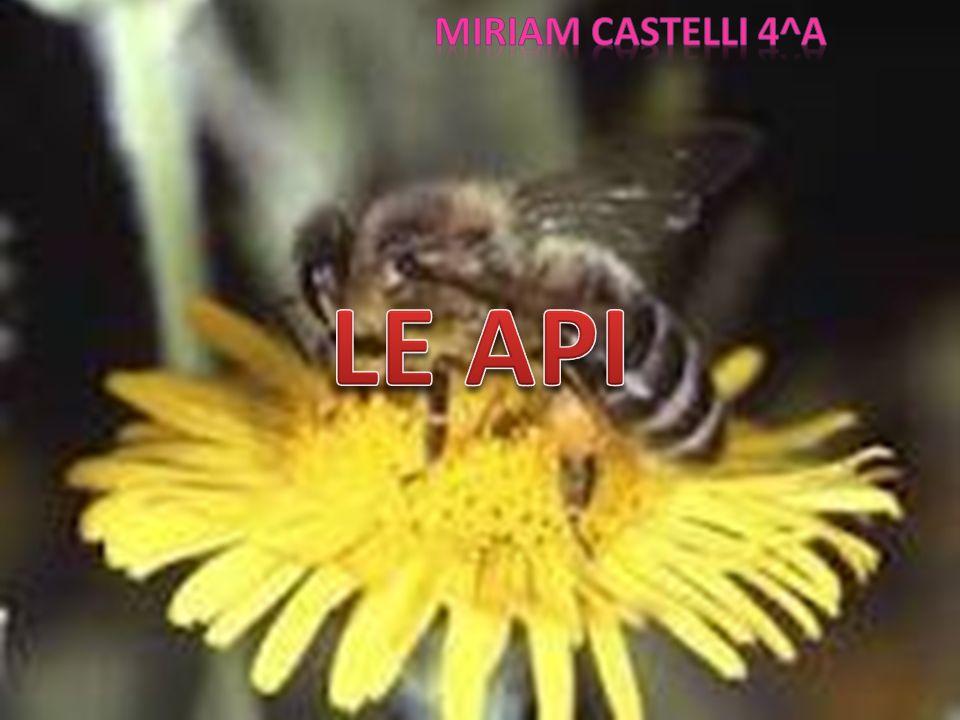 MIRIAM CASTELLI 4^a LE API