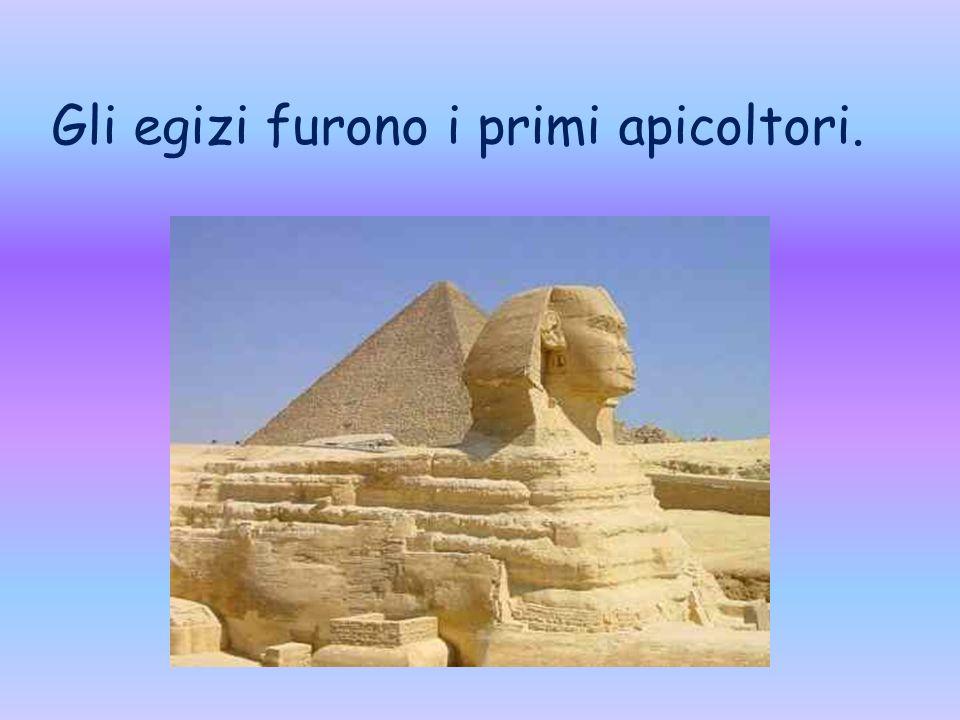 Gli egizi furono i primi apicoltori.