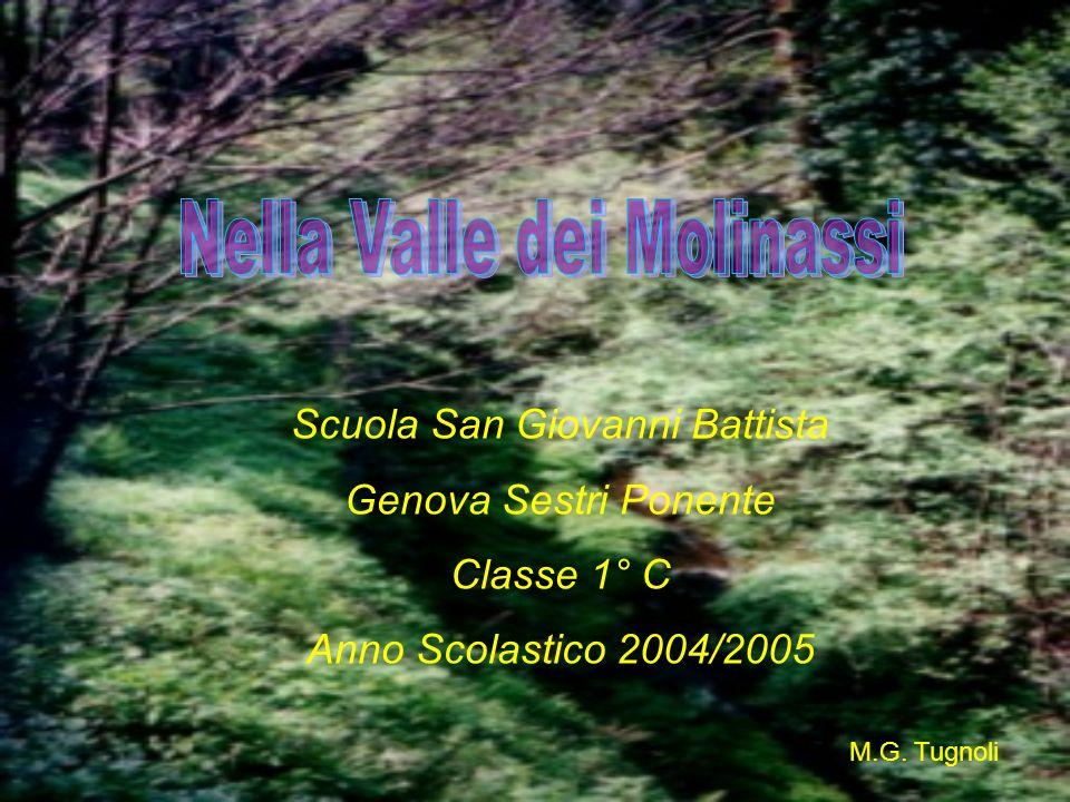 Nella Valle dei Molinassi