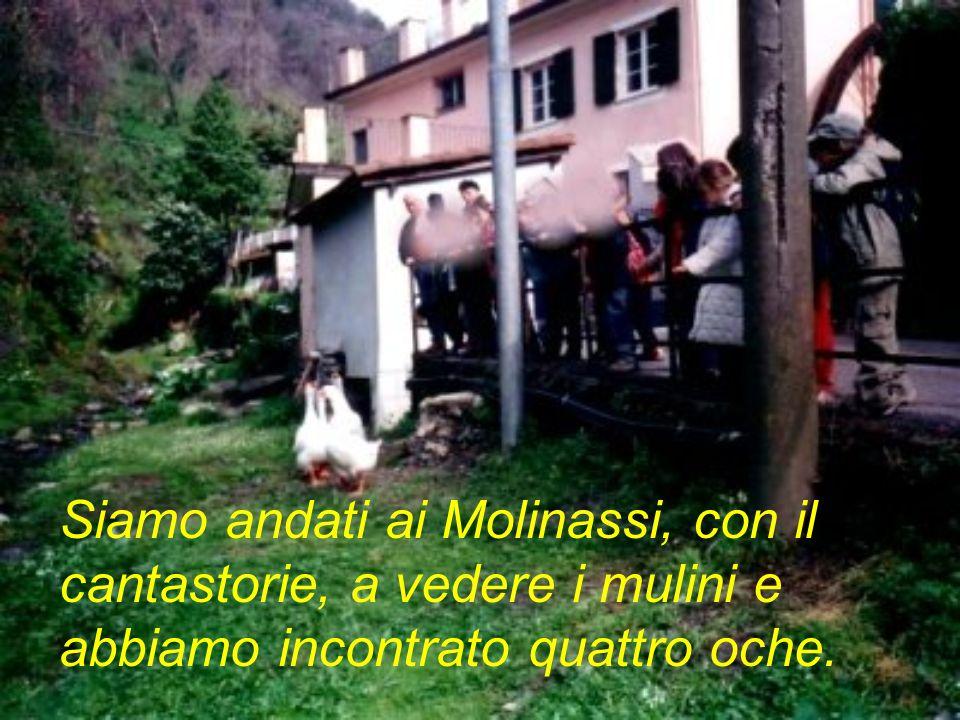 Siamo andati ai Molinassi, con il cantastorie, a vedere i mulini e abbiamo incontrato quattro oche.