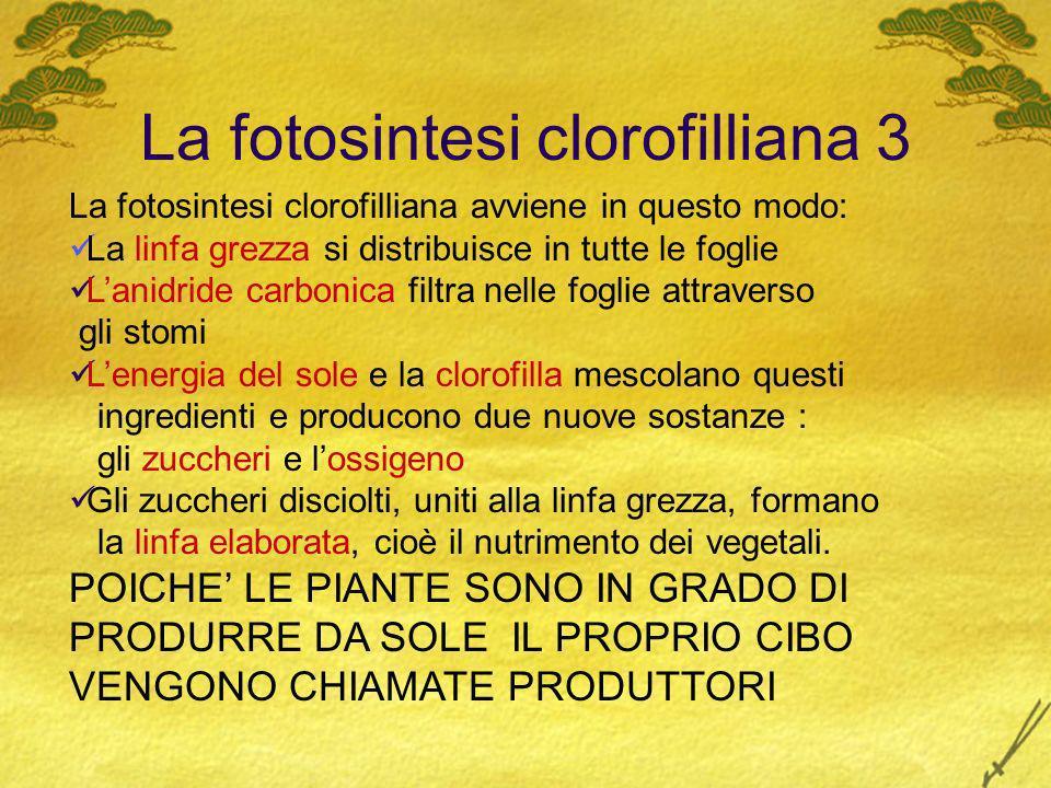 La fotosintesi clorofilliana 3