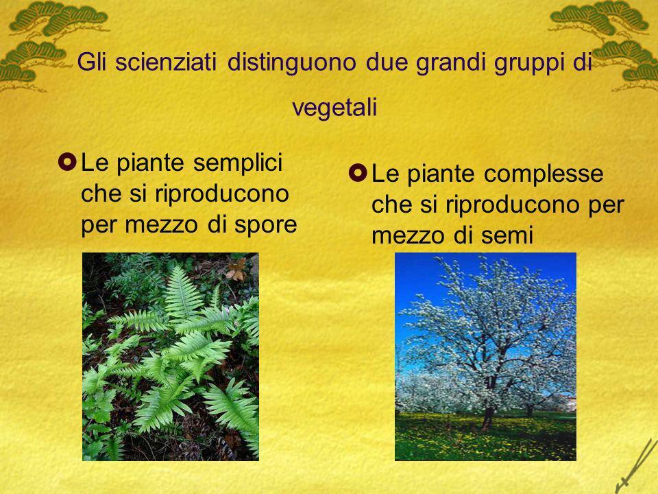 Gli scienziati distinguono due grandi gruppi di vegetali