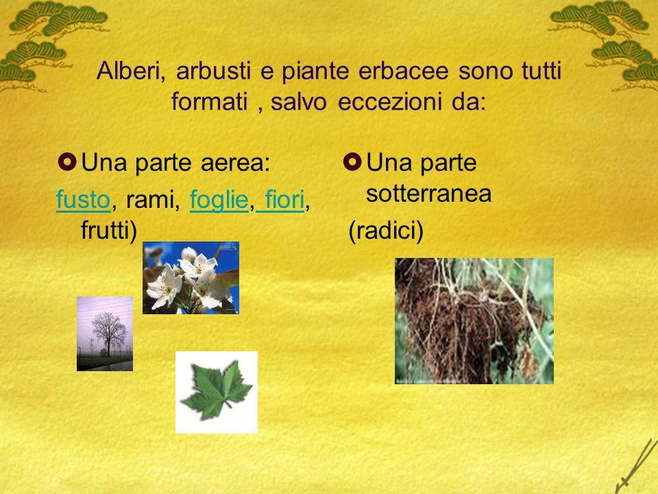 Alberi, arbusti e piante erbacee sono tutti formati , salvo eccezioni da: