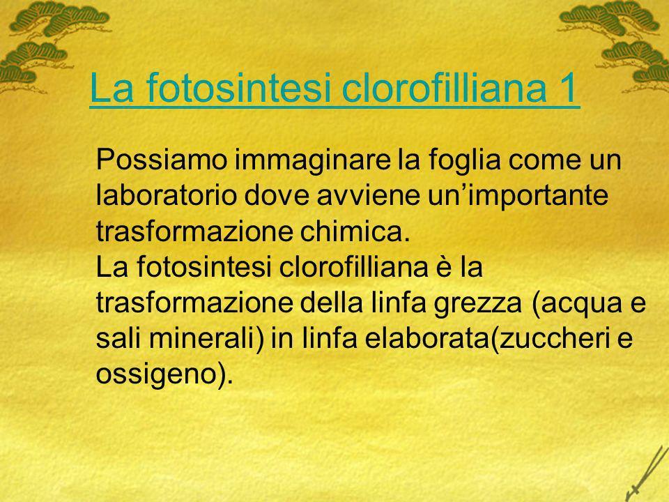 La fotosintesi clorofilliana 1