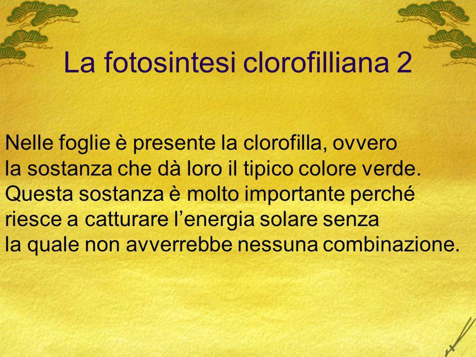 La fotosintesi clorofilliana 2