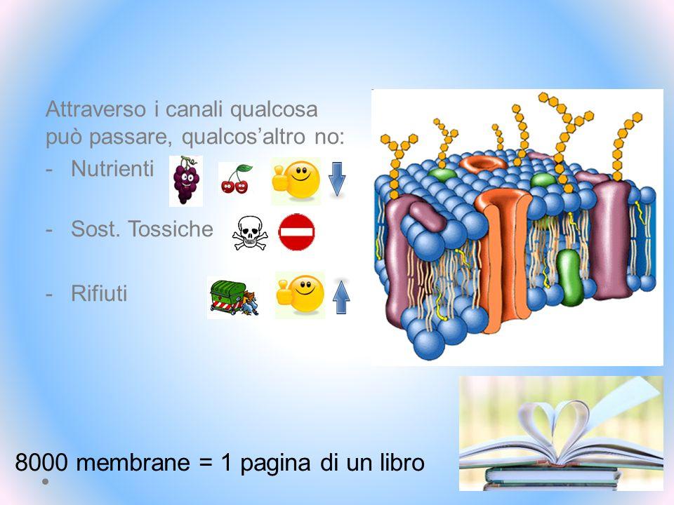 8000 membrane = 1 pagina di un libro