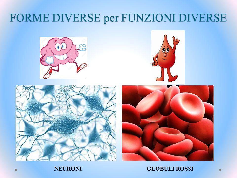 FORME DIVERSE per FUNZIONI DIVERSE