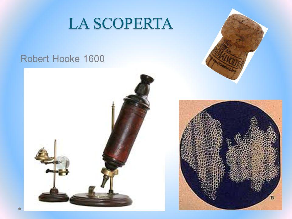 LA SCOPERTA Robert Hooke 1600