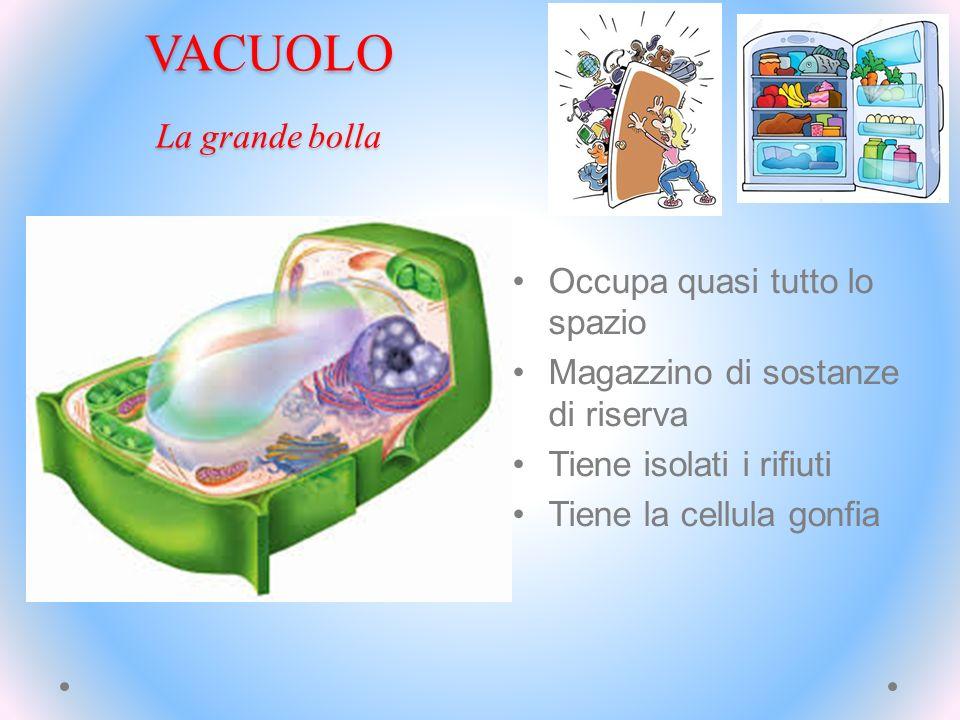 VACUOLO La grande bolla