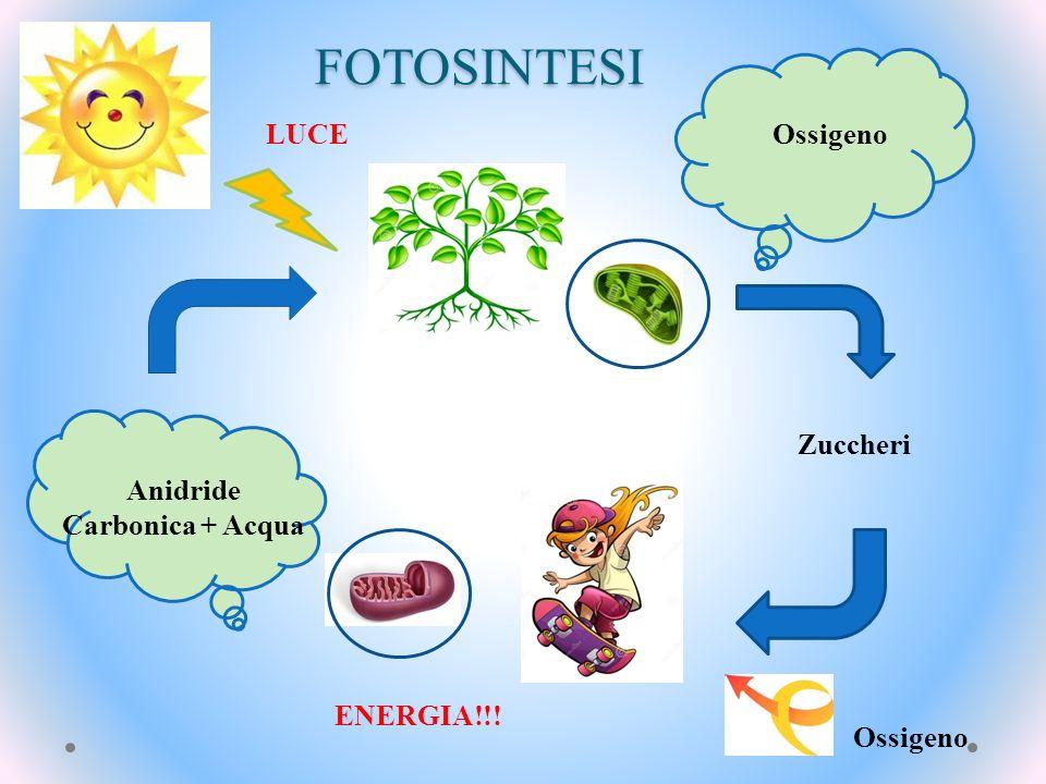 Anidride Carbonica + Acqua
