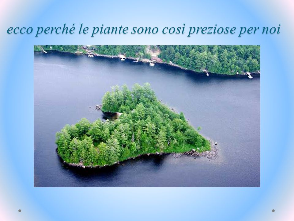 ecco perché le piante sono così preziose per noi