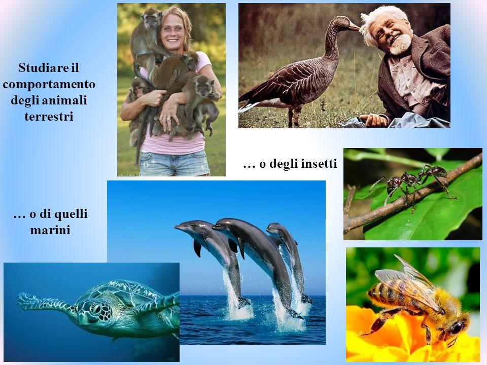 Studiare il comportamento degli animali terrestri