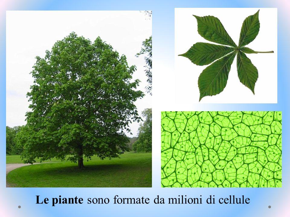 Le piante sono formate da milioni di cellule