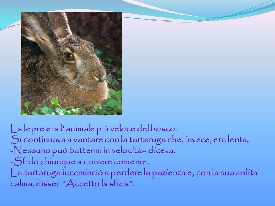 La lepre era l' animale più veloce del bosco.