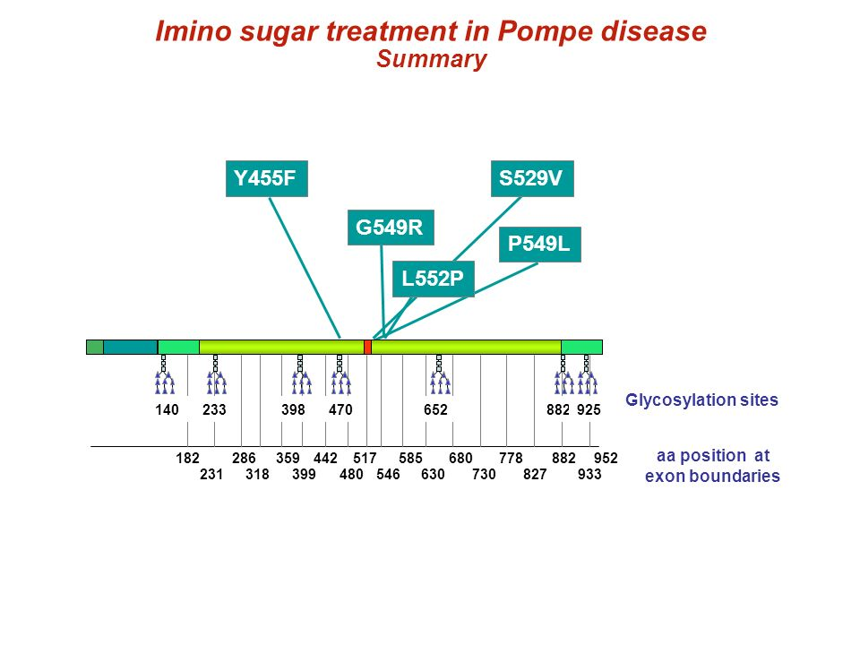 Imino sugar treatment in Pompe disease aa position at exon boundaries