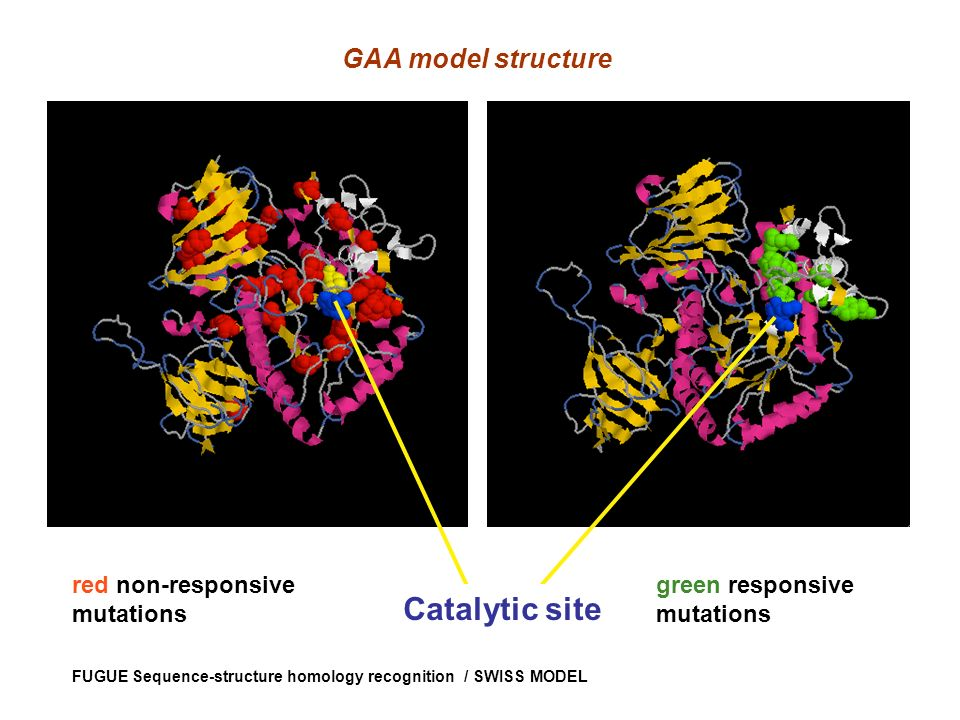 Catalytic site GAA model structure red non-responsive mutations