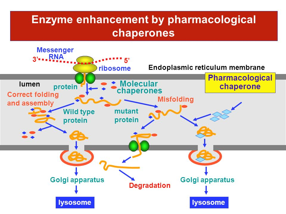 Enzyme enhancement by pharmacological chaperones