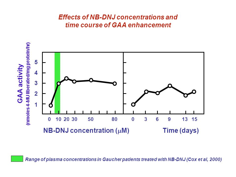 Effects of NB-DNJ concentrations and time course of GAA enhancement