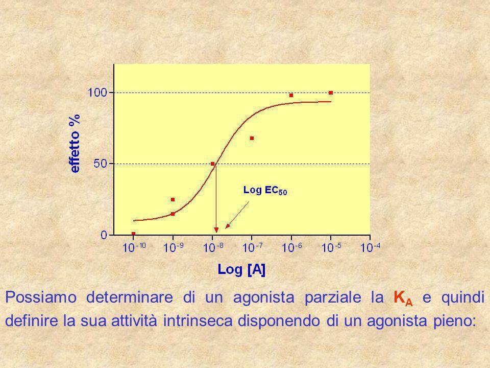 Possiamo determinare di un agonista parziale la KA e quindi definire la sua attività intrinseca disponendo di un agonista pieno: