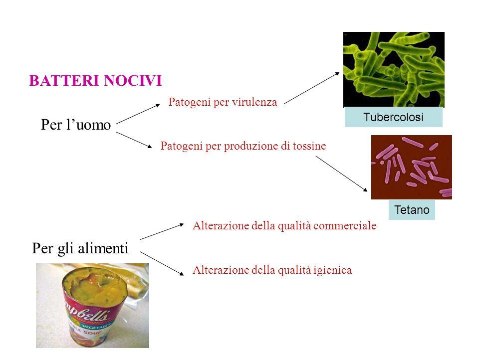 BATTERI NOCIVI Per l'uomo Per gli alimenti Patogeni per virulenza