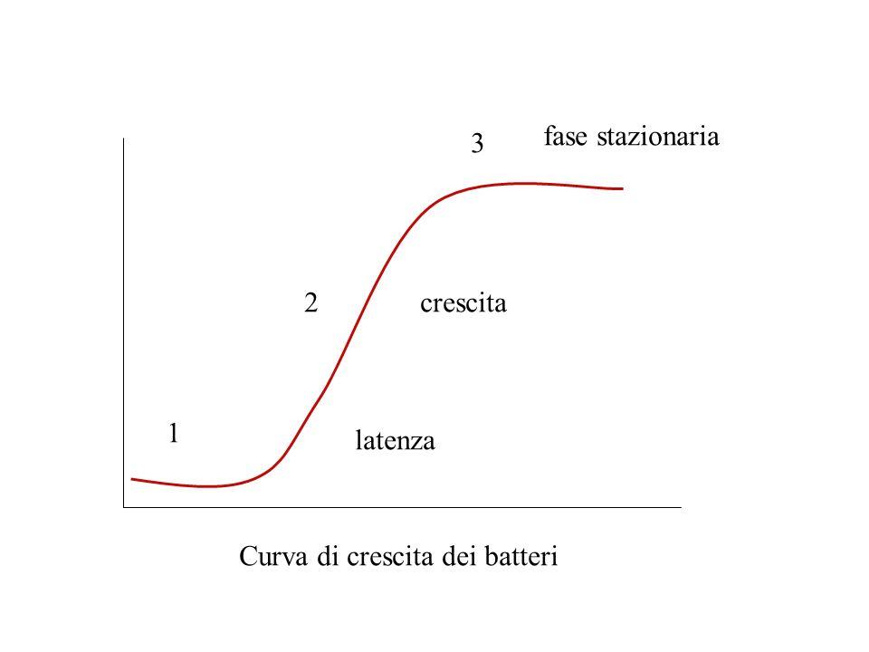 fase stazionaria 3 2 crescita 1 latenza Curva di crescita dei batteri