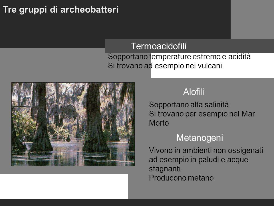 Tre gruppi di archeobatteri