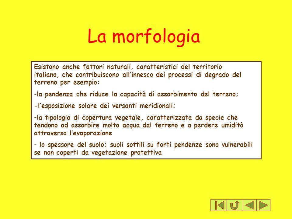 La morfologia