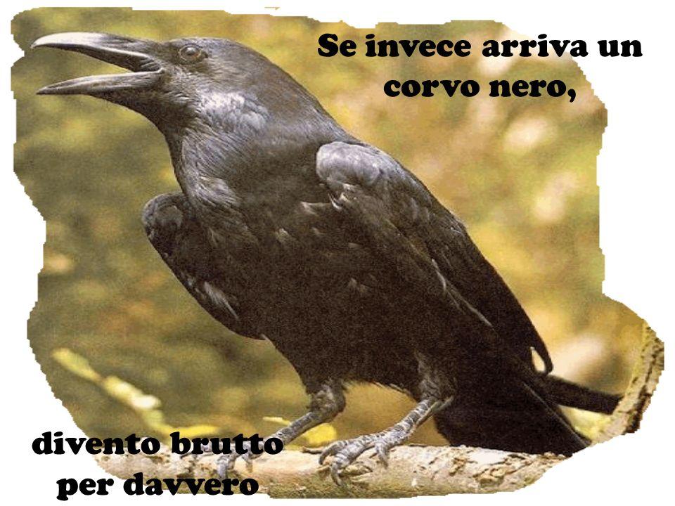 Se invece arriva un corvo nero,