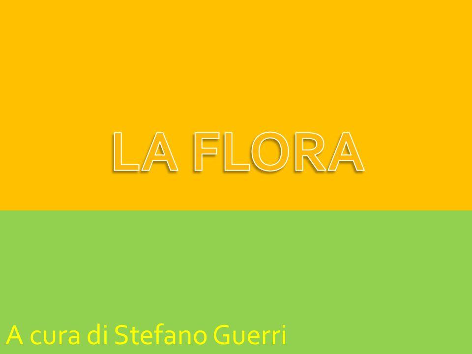A cura di Stefano Guerri