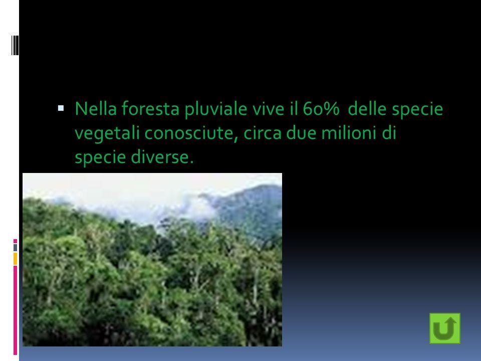 Nella foresta pluviale vive il 60% delle specie vegetali conosciute, circa due milioni di specie diverse.