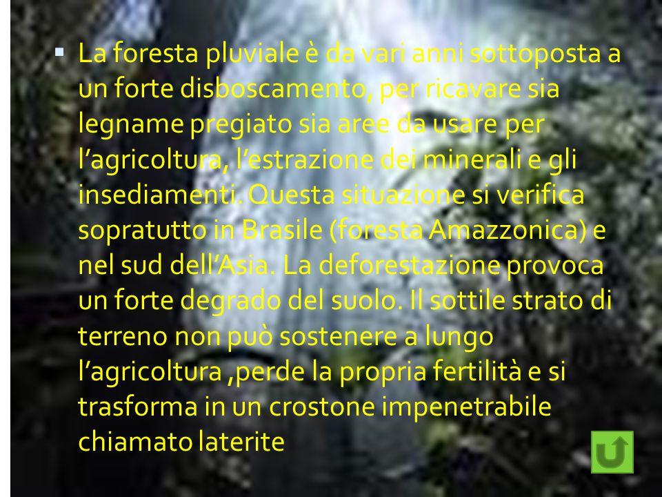 La foresta pluviale è da vari anni sottoposta a un forte disboscamento, per ricavare sia legname pregiato sia aree da usare per l'agricoltura, l'estrazione dei minerali e gli insediamenti.