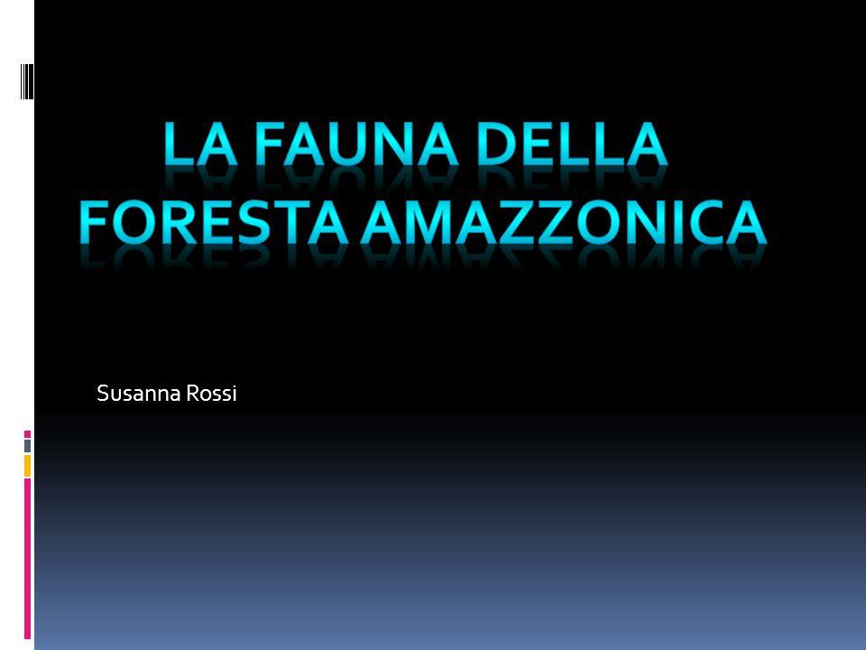 La fauna della Foresta amazzonica