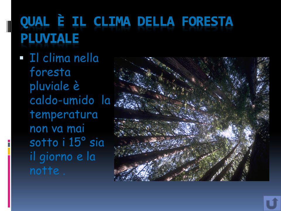Qual è il clima della foresta pluviale