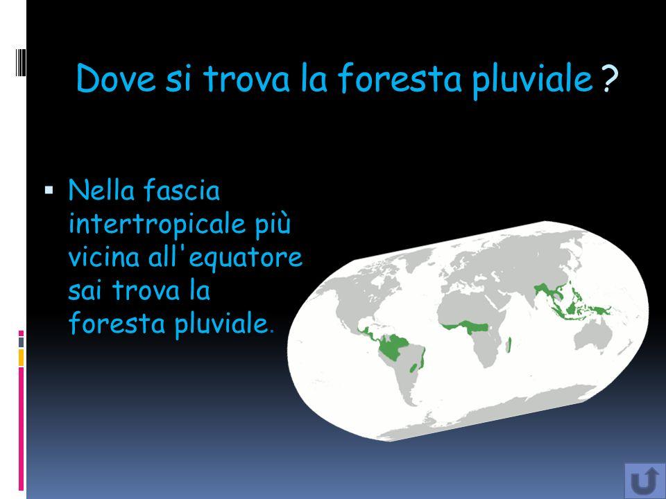 Dove si trova la foresta pluviale