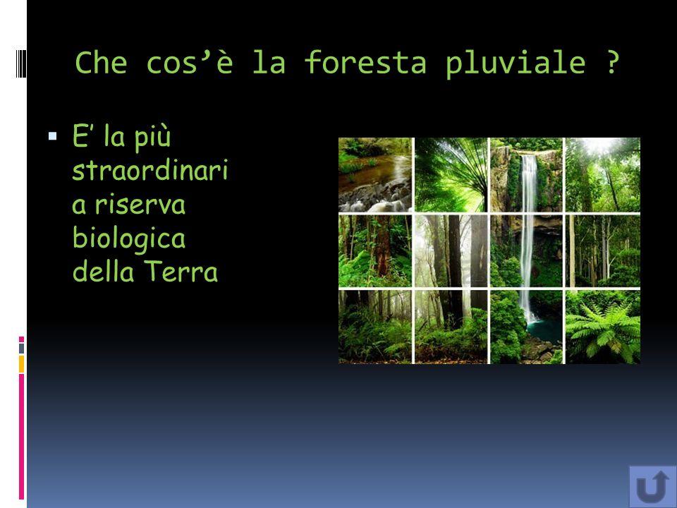 Che cos'è la foresta pluviale