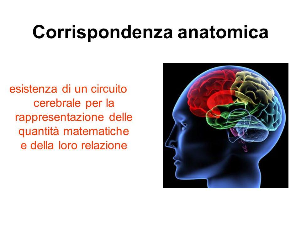Corrispondenza anatomica