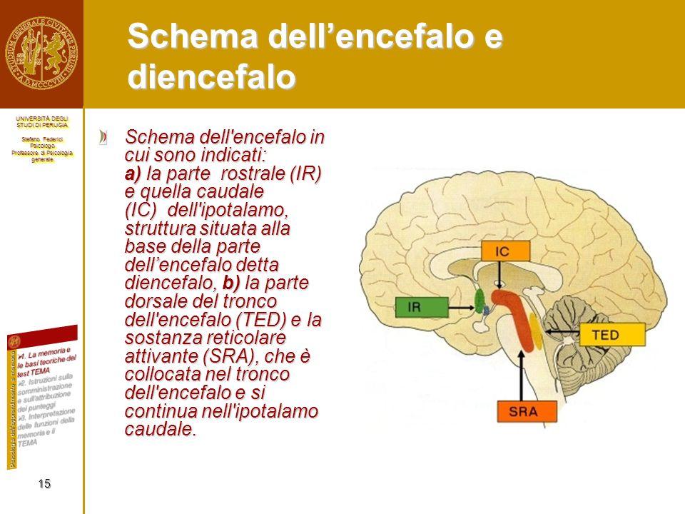 Schema dell'encefalo e diencefalo