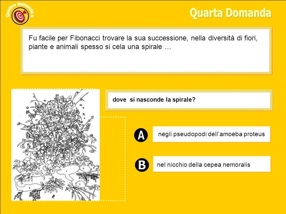 Quarta Domanda Fu facile per Fibonacci trovare la sua successione, nella diversità di fiori, piante e animali spesso si cela una spirale …