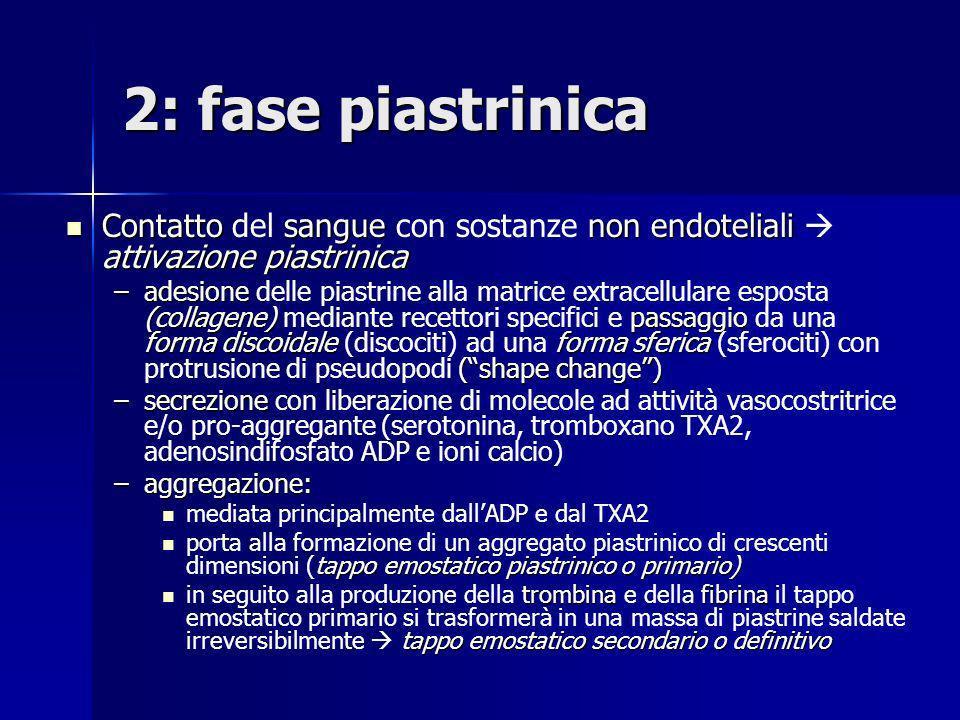 2: fase piastrinica Contatto del sangue con sostanze non endoteliali  attivazione piastrinica.
