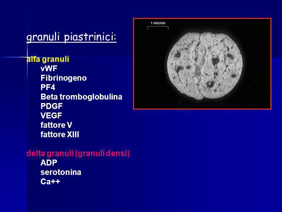 granuli piastrinici: alfa granuli vWF Fibrinogeno PF4