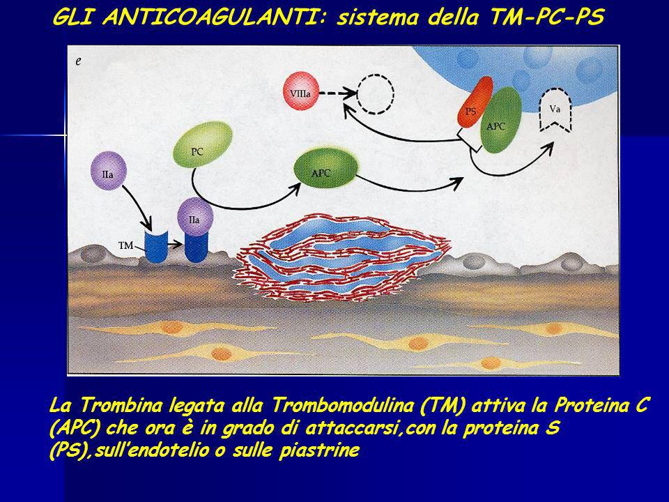 GLI ANTICOAGULANTI: sistema della TM-PC-PS