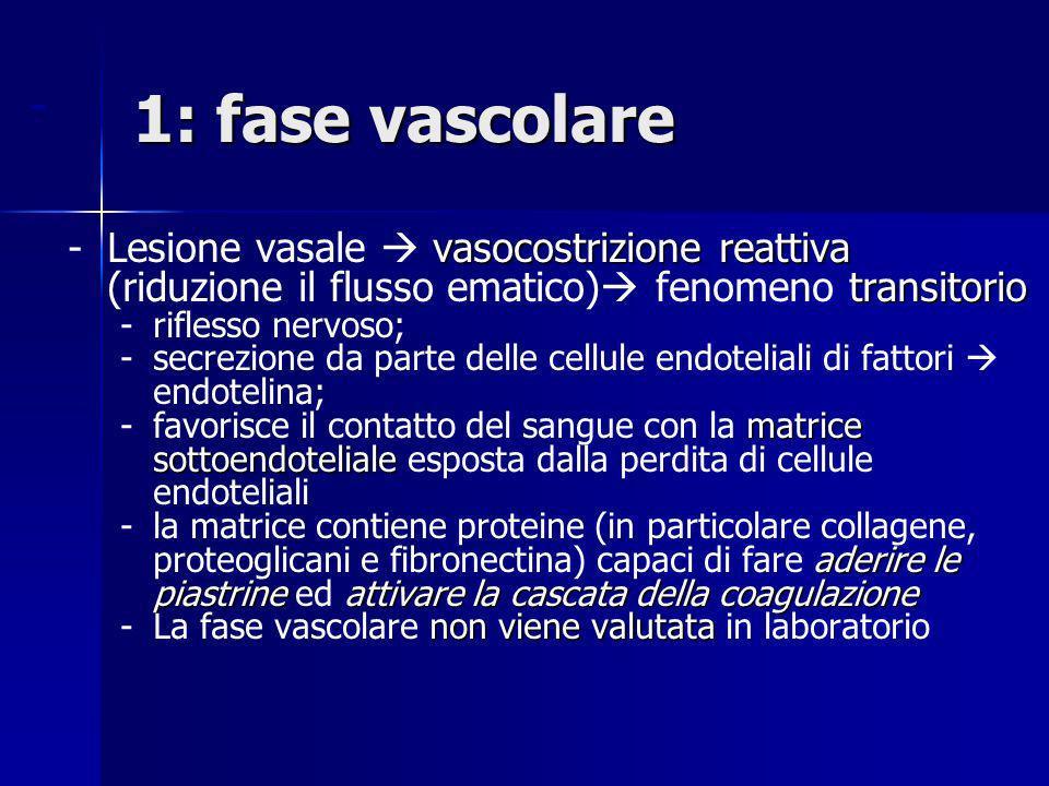1: fase vascolare - Lesione vasale  vasocostrizione reattiva (riduzione il flusso ematico) fenomeno transitorio.