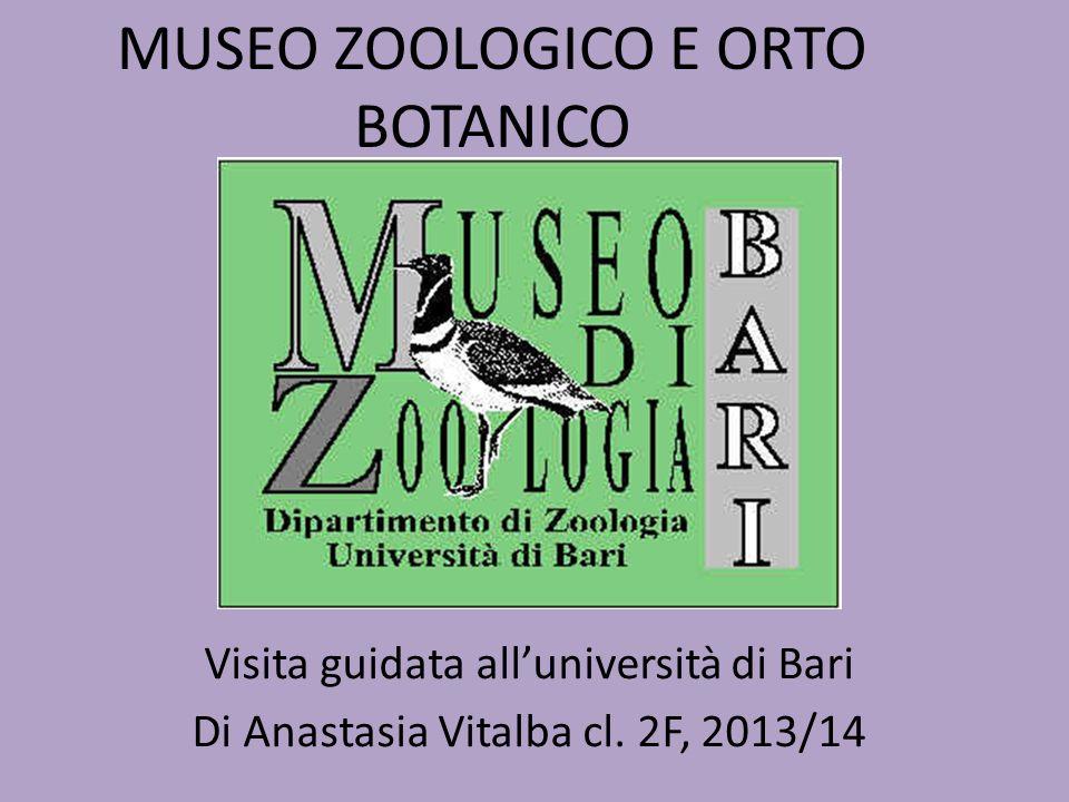 MUSEO ZOOLOGICO E ORTO BOTANICO