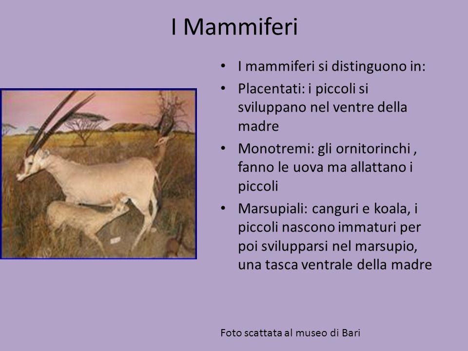 I Mammiferi I mammiferi si distinguono in: