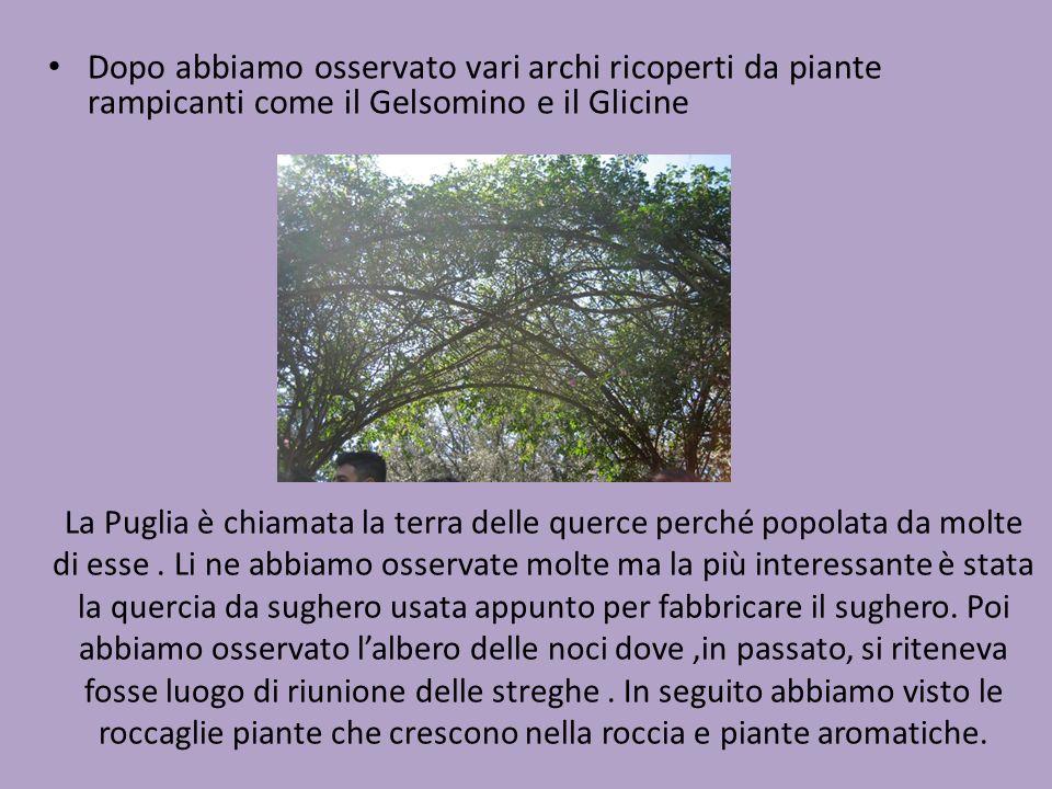 Dopo abbiamo osservato vari archi ricoperti da piante rampicanti come il Gelsomino e il Glicine