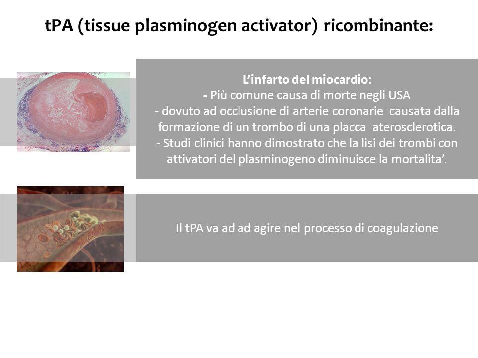 tPA (tissue plasminogen activator) ricombinante: