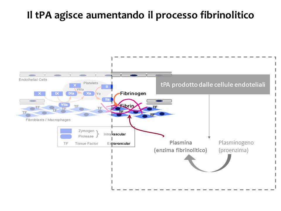 Il tPA agisce aumentando il processo fibrinolitico