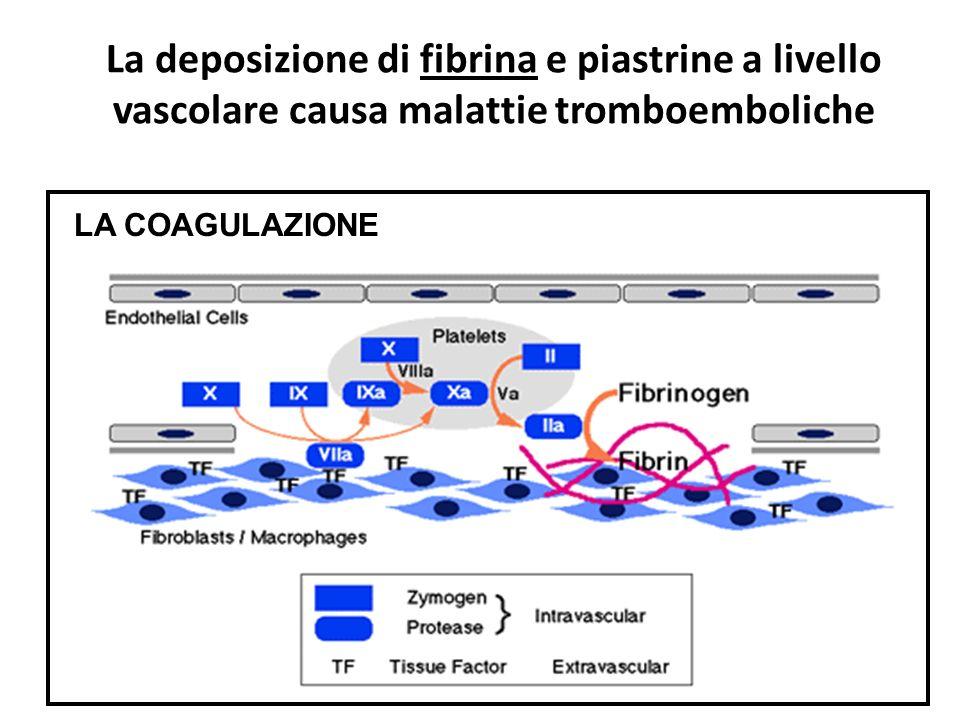 La deposizione di fibrina e piastrine a livello vascolare causa malattie tromboemboliche